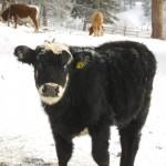 back-valley-ranch-photos-002